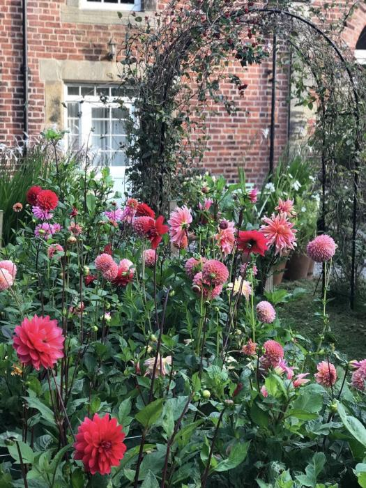 Garden musings Sept 2018